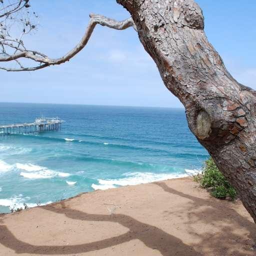 The 10 Best Beaches in San Diego