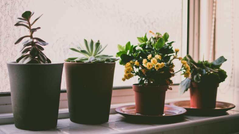 Living in An Apartment? Here Are 9 Houseplants Perfect for Your Setup